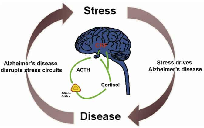 the relationship between stress and alzheimer's
